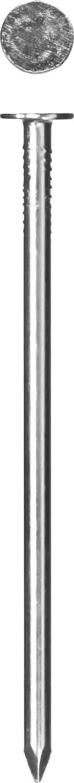 Фото Гвозди с большой потайной головкой, оцинкованные, 40 х 3.0 мм, 100 гр., ЗУБР {305096-30-040}